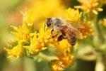 Wakacje z owadami