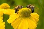 Przychylają pszczołom nieba
