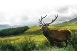 Jak poluję na jelenie