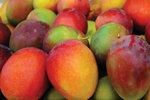 O tym, jak mango pomogło przetrwać Stefce w czasach szarych i smutnych jak kraina Drakuli...